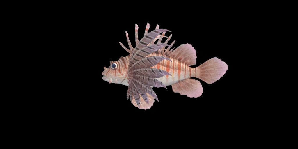 zebra_turkeyfish